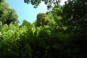 Blick zum südlichen Bereich, nur Bäume und Sträucher